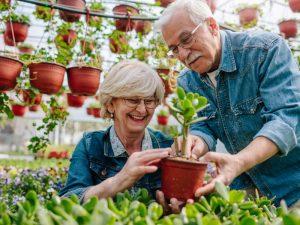 Beneficios-de-la-jardineria-para-personas-mayores-300x225 Beneficios de la jardinería para personas mayores.